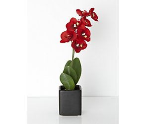 Small potted orchid
