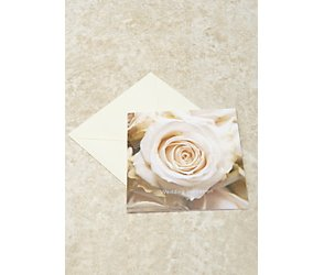 Cream roses day invitations